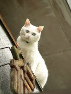 White cat, by Paul_ (shin.ogata)