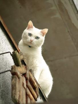 White cat, by Paul_ (shin.ogata)