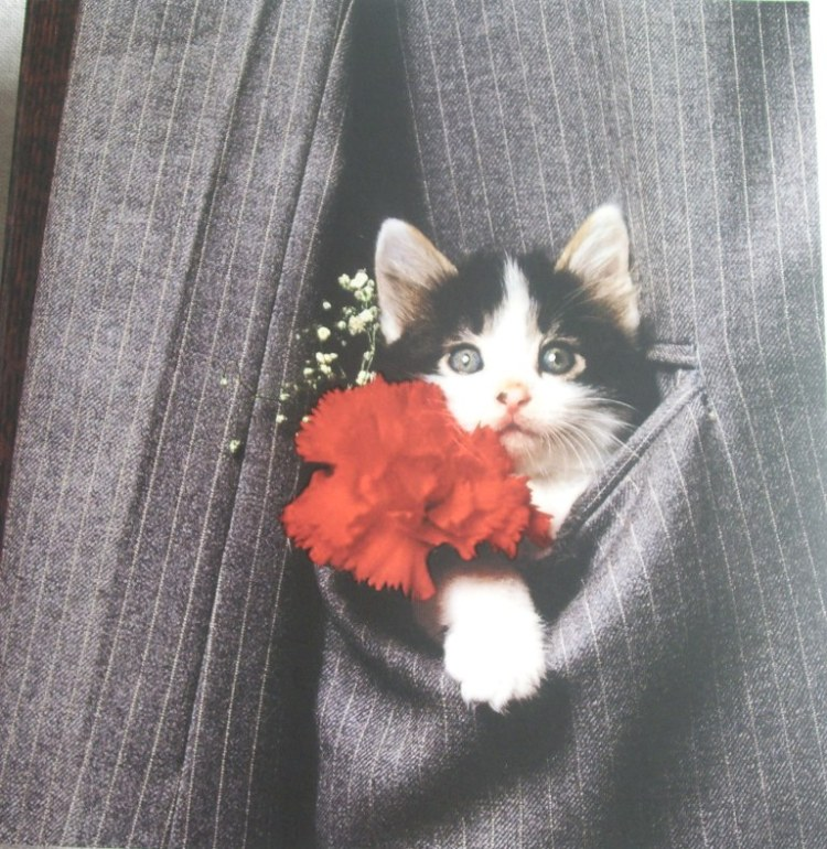 Kitten in pocket