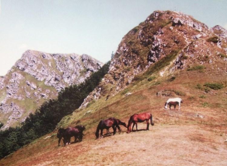 horses in Stara Planina