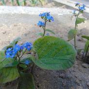 Цветя в двора, в село Певците, снимано от Симон Мартин